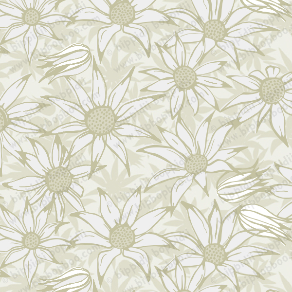 flannel flowers (cream)