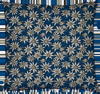 flannel flowers (blue margaret)